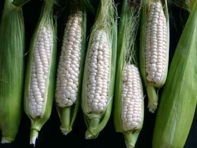 Ox And Robin Seeds- Luther Hill Sweet Corn
