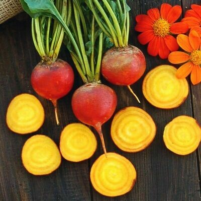 High Mowing SEEDS Touchstone Gold Beets