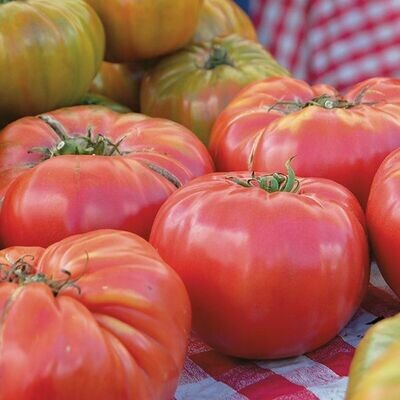 High Mowing SEEDS Brandywine Tomato