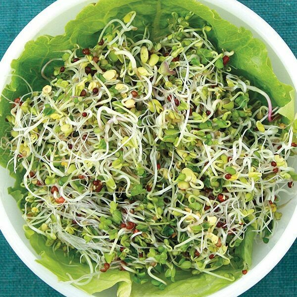 High Mowing MICROGREENS SEEDS Sprouting Broccoli Blend