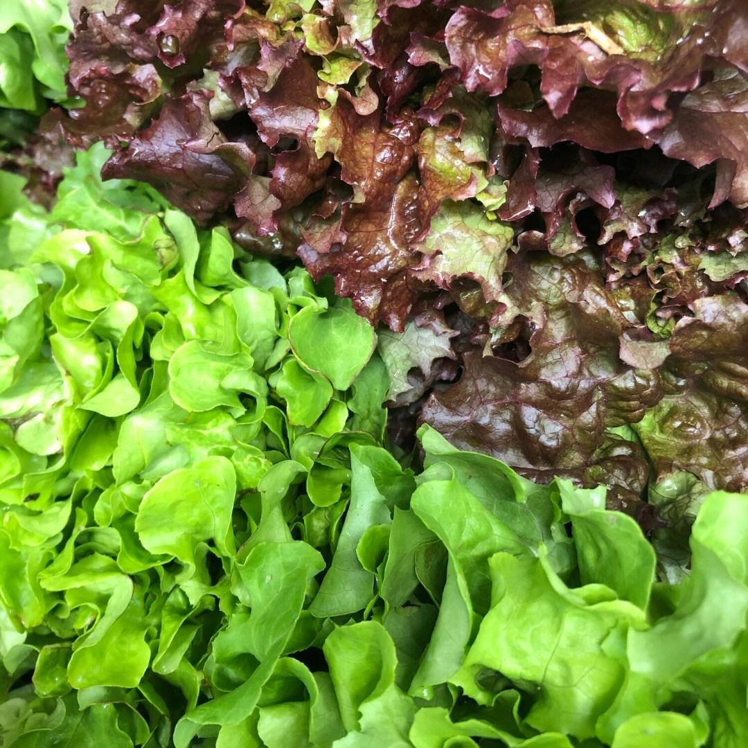 Lettuce - Head * Simple Gifts Farm