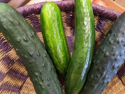 Cucumbers , Hoop House Grown Sm - Each *  Simple Gifts Farm