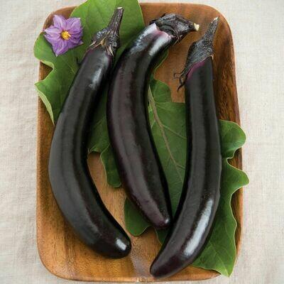 SGF Plant Start - Orient Express Eggplant - 4