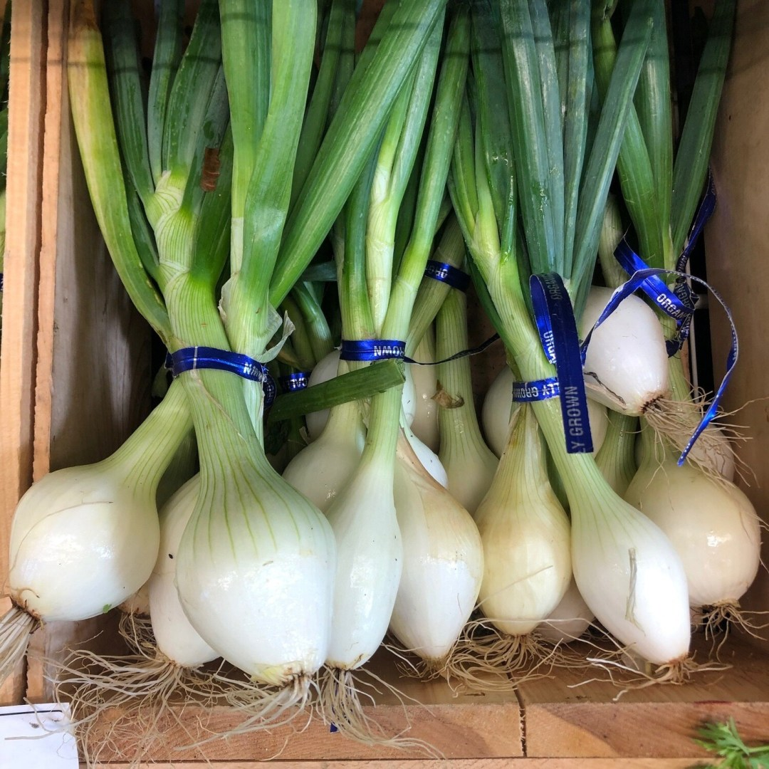 Onions , Spring White - Bunched * SGF
