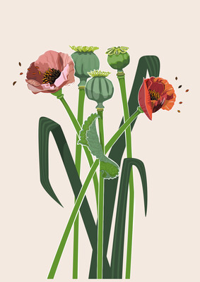 Poppies - Illustrated Art Print