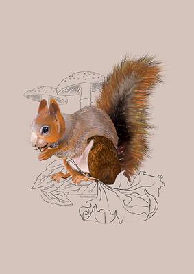 Squirrel - Illustrated Art Print