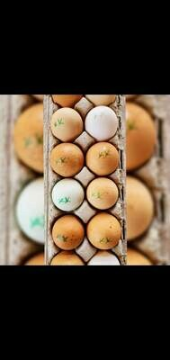 Eggs (Chicken Tracks)