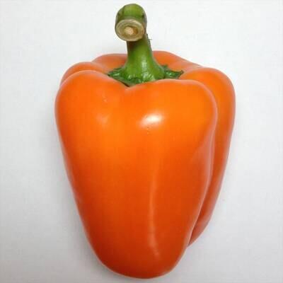 Orange Bell Pepper Seeds
