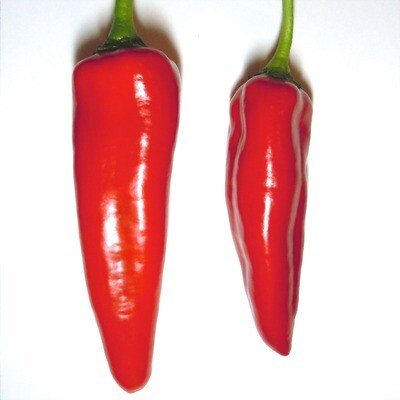 Hatch - Red Chile Seeds