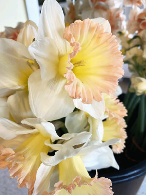 Special Occasion Bouquet for farmstand pickup