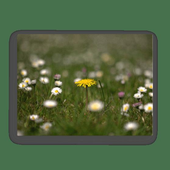 Meadow Flower Canvas Print