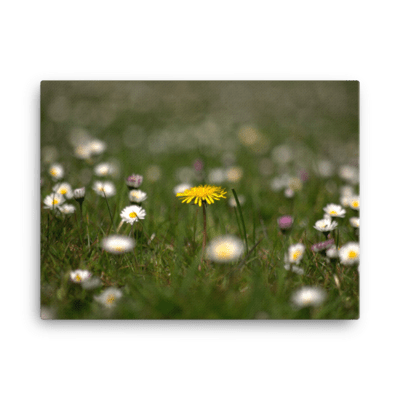 Meadow Flower Canvas Print