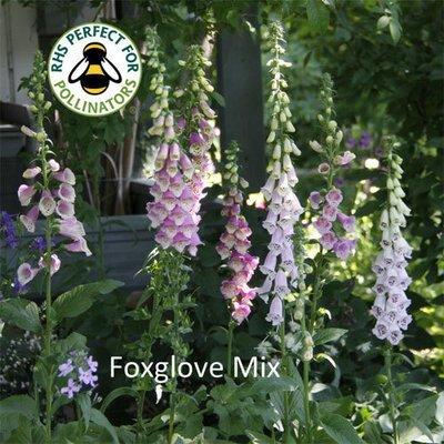 Foxglove Mix