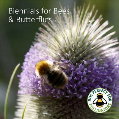 Butterfly & Bee Biennials Seed Collection