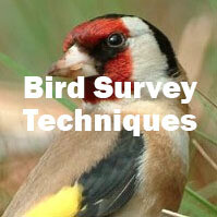 Bird Survey Techniques (Exeter): 16th July 2021