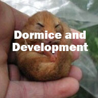 Dormice and Development (Hampshire): 11th November 2020
