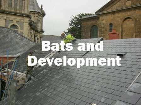 Bats and Development (Exeter, Devon): 22nd October 2021