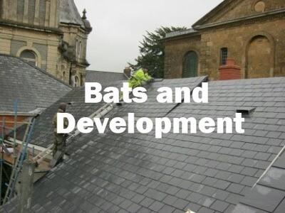 Bats and Development (Exeter, Devon): 22nd October 2021