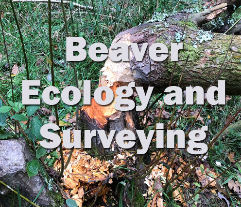 Beaver Ecology and Surveying (Devon) 4th October 2021