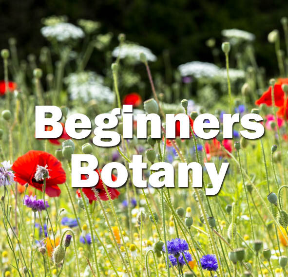 Beginners Botany (Bristol) - 2022 date to be confirmed