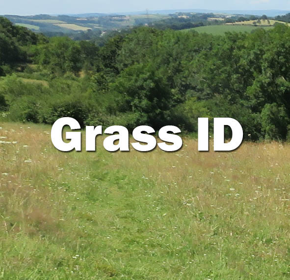 Grass ID (Hampshire): 12th July 2021