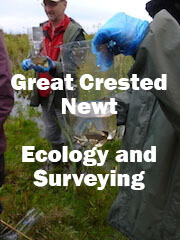 Great Crested Newt Ecology and Surveying (Somerset): 2022 dates to be confirmed