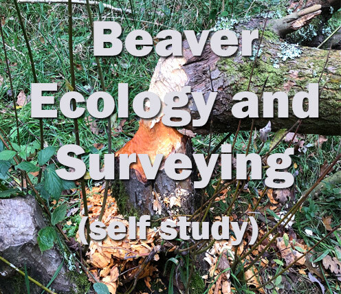 Beaver Ecology and Surveying - online course