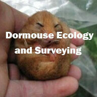 Dormouse Ecology & Surveying (Exeter) 21st May 2021 SOLD OUT