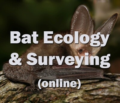 Bat Ecology and Surveying (online)