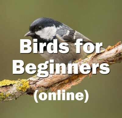 Birds for Beginners (online) **NEW**