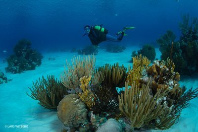 Beautiful underwater world of Cuba. Playa Giron, South Cuba