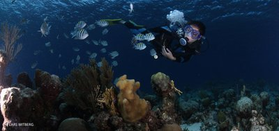 Beautiful underwater world of Cuba, Playa Giron, Cuba
