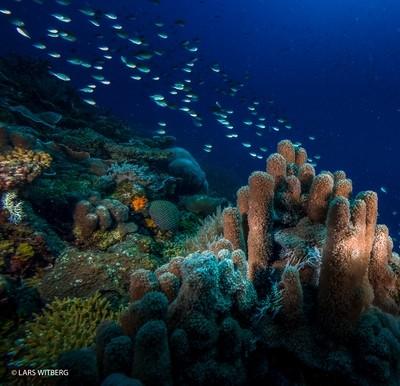 Coral reef, Quirimbas