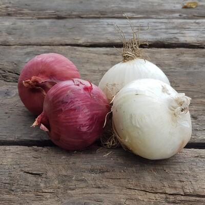 Cipolle rosse e bianche (1kg)