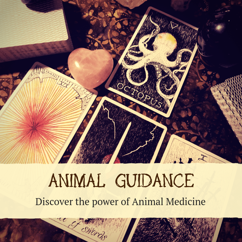 Animal Guidance