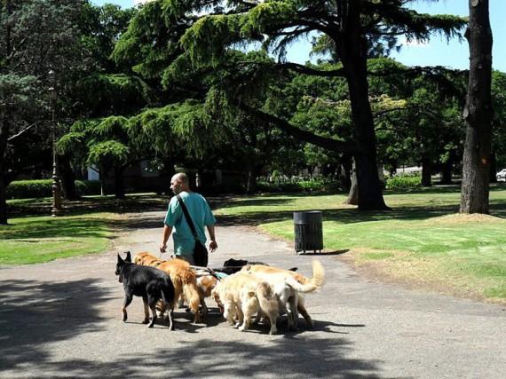 Promeneur de chien Buenos Aires Argentine
