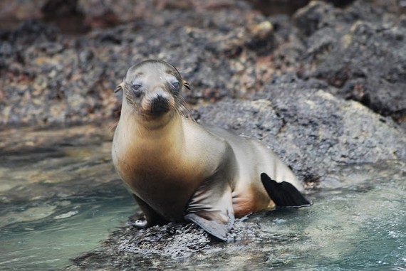 Parc national Galapagos, Equateur