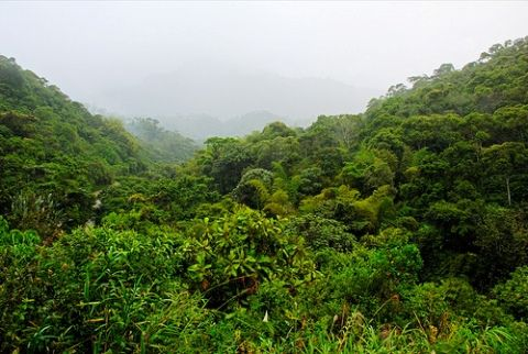 Jungle of Maquipucuna Reserve