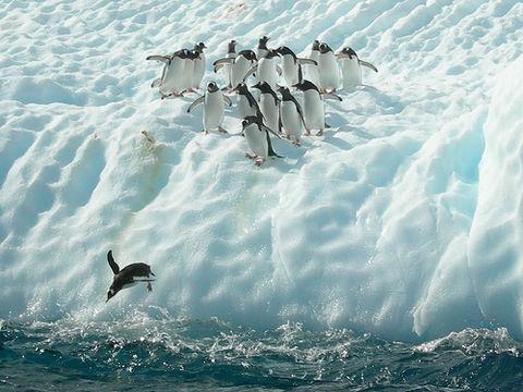 58678 - Pinguine