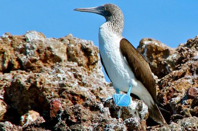 Galápagos National Park (Ecuador)