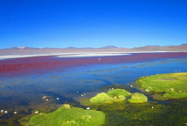 Salar de Uyuni Bolivien - Laguna Colorada