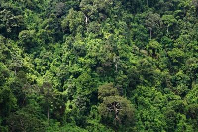 The density of the Amazon rainforest