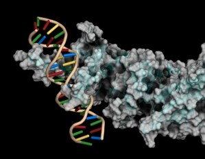 The study reveals how DNA segments function in cells