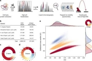 Mann & theis' new publication on nature communications takes advantage of large-scale peptide cross-sectional collision (CCS) benefits and in-depth learning for 4D proteomics