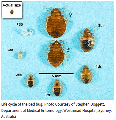 Scientific Study Showing Exact Time Bed Bugs Die Without A ...