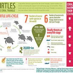 Leatherback Sea Turtle Food Web Diagram 2005 Scion Xb Radio Wiring Marine Turtles Wwf Infographic In The