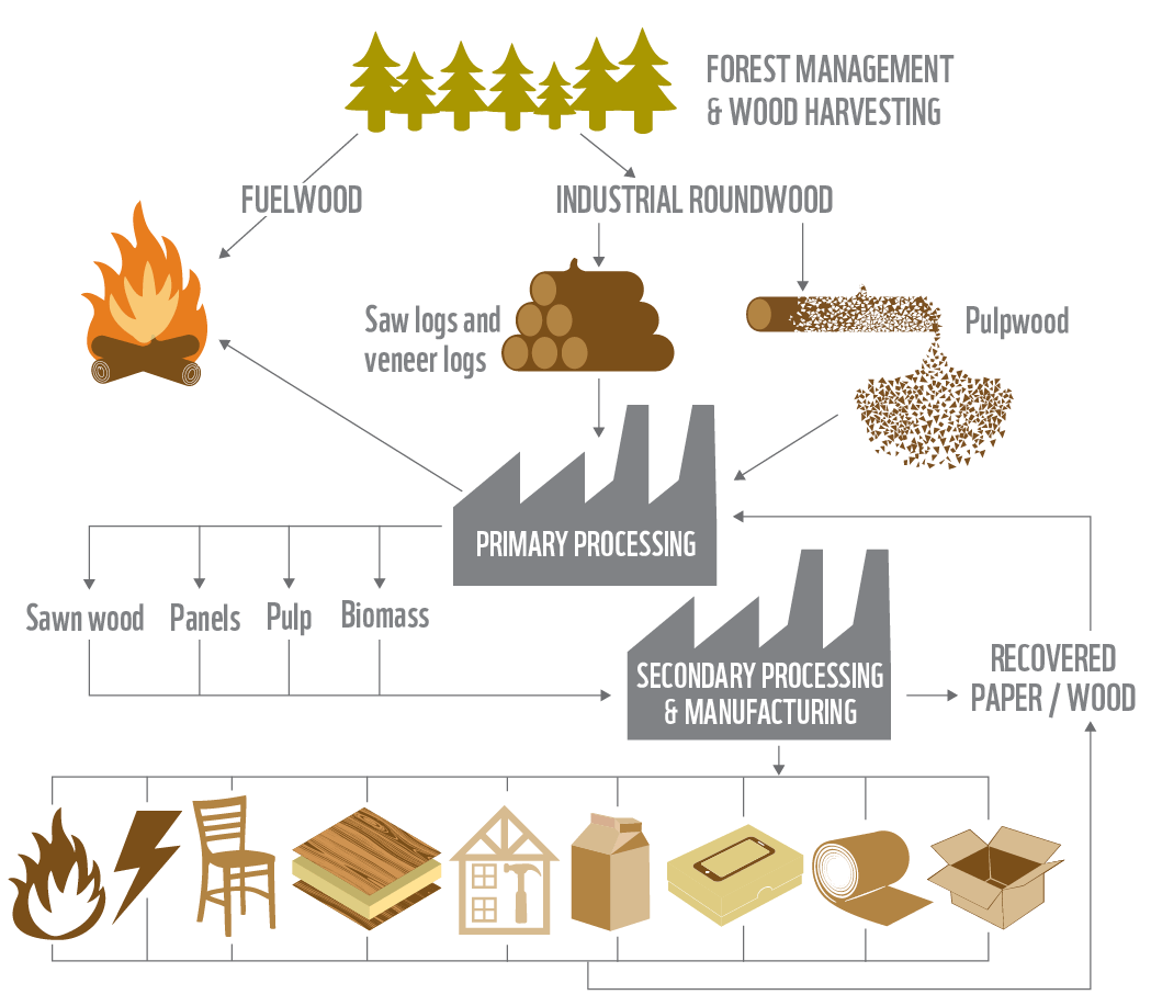 diagram of paper making process phone cat 5 wiring industry key to conserving forests as demand for wood ...