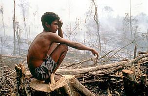 Kobu tribu viendo selva en llamas.  Un espacio utilizado por generaciones para las plantas de caza y medicinales Bukit Parque Nacional Puluh Tigah, Sumatra, Indonesia