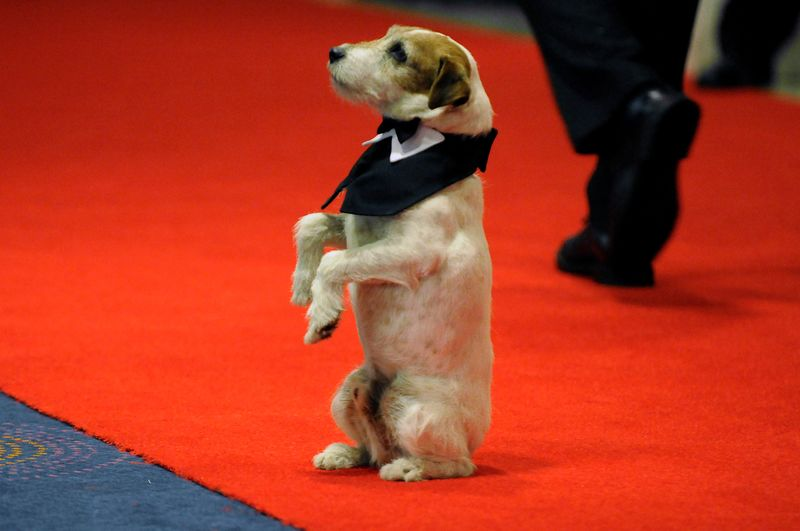 Terrier Uggie from 'The Artist' crowned best Cannes movie mutt