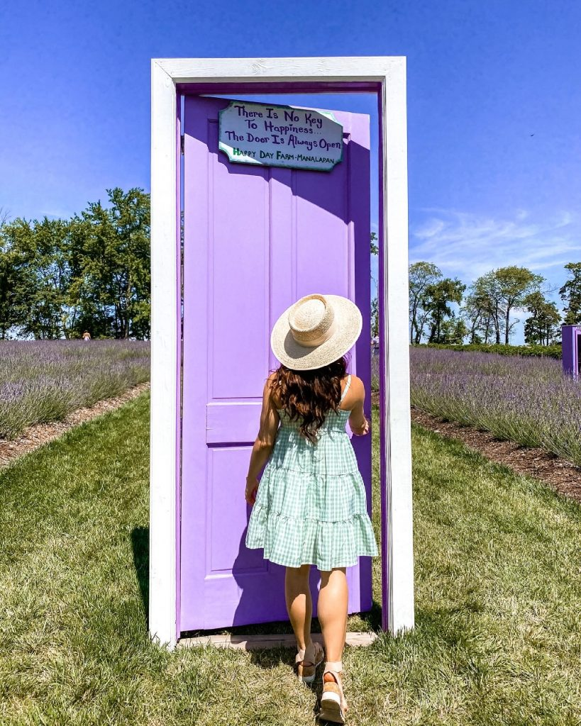 Lavender Fields at Happy Day Farm